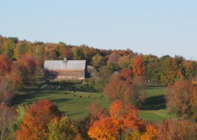 fall at the farm with cattle